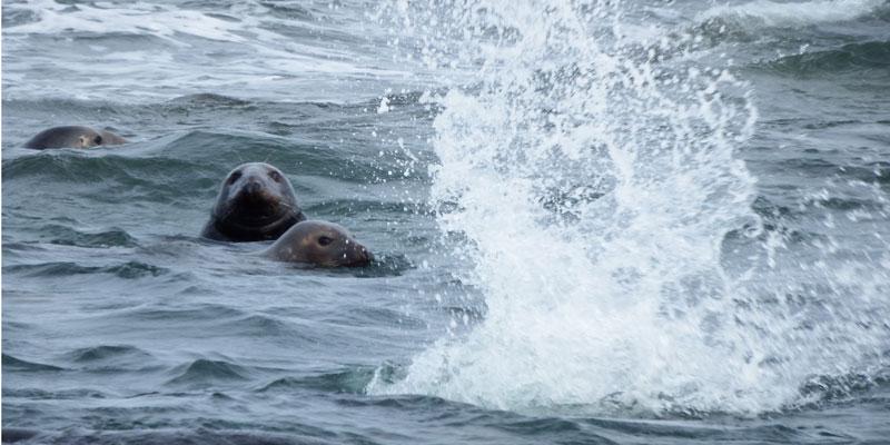 blog-seals