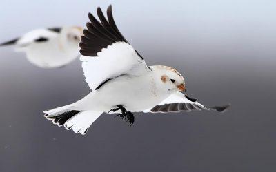 Bird joy